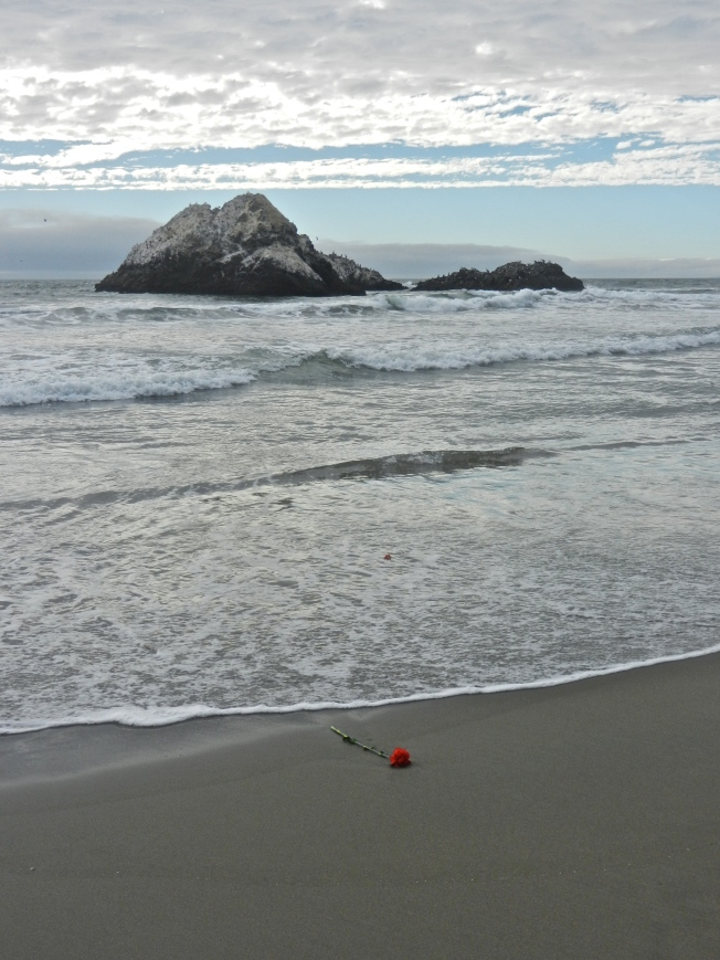 Flower on the Shore, Ocean Beach, San Francisco 1 September 2013