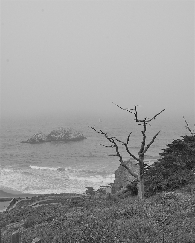 Seal Rocks, Sailboat, Tree at Land's End, San Francisco, CA 083113