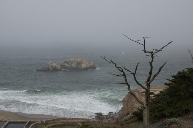 Grey Series: Seal Rocks, Sailboat, Tree, 083113