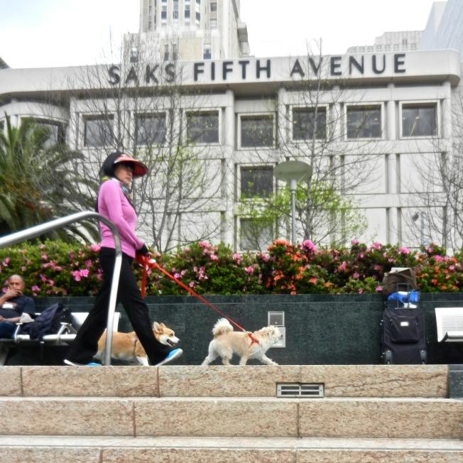 Dog Walker, Union Square, San Francisco