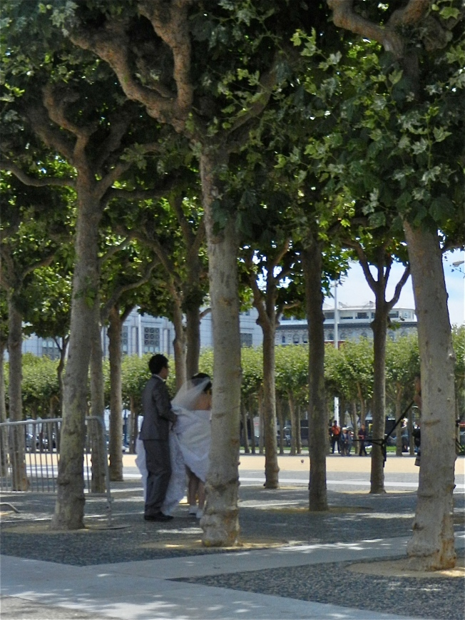 Newlyweds in the Trees of the Civic Center