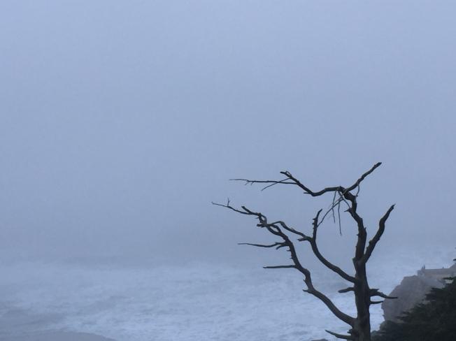 Lone Tree at Seal Rocks, 19 January 2015.